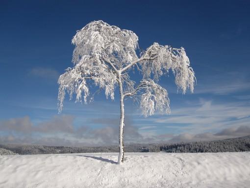 winter-1675197_1920